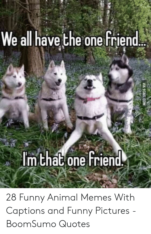 And Funny: We all have the one friend  m chat one Friend. 28 Funny Animal Memes With Captions and Funny Pictures - BoomSumo Quotes