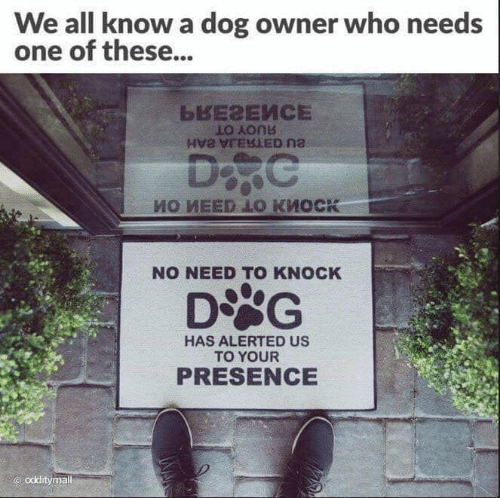 Dank, 🤖, and Dog: We all know a dog owner who needs  one of these...  NO NEED TO KNOCK  DSG  HAS ALERTED US  TO YOUR  PRESENCE  odditymal