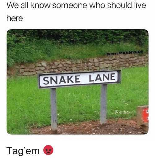 Funny, Live, and Snake: We all know someone who should live  here  MEMEMANMYLES  SNAKE LANE Tag'em 😡