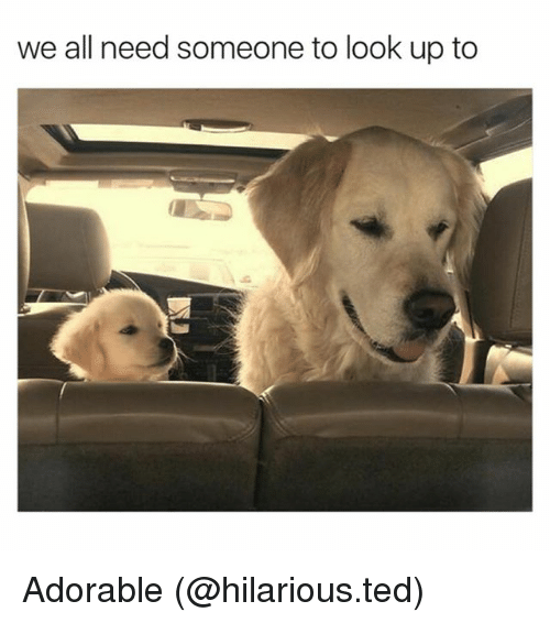 we all need someone to look up to adorable