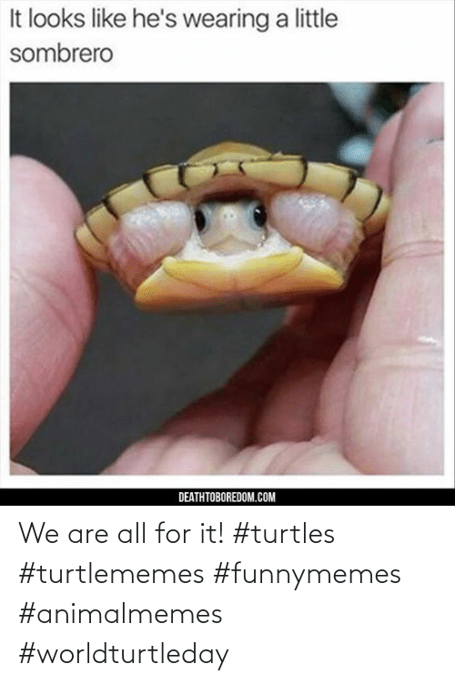 We Are: We are all for it! #turtles #turtlememes #funnymemes #animalmemes #worldturtleday
