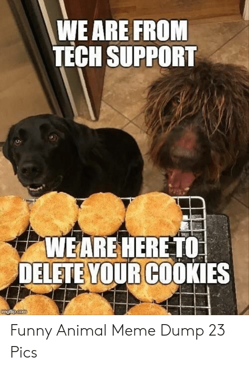 Cookies, Funny, and Meme: WE ARE FROM  TECH SUPPORT  WEARE HERETO  DELETE YOUR COOKIES  com Funny Animal Meme Dump 23 Pics