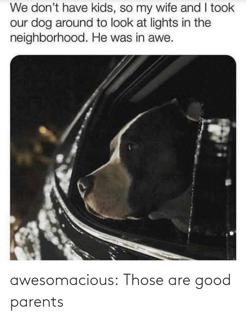 lights: We don't have kids, so my wife and I took  our dog around to look at lights in the  neighborhood. He was in awe. awesomacious:  Those are good parents