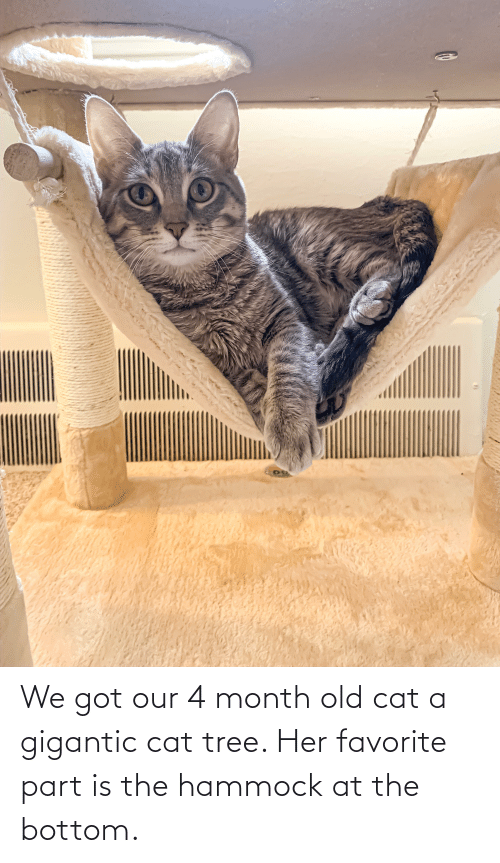 gigantic: We got our 4 month old cat a gigantic cat tree. Her favorite part is the hammock at the bottom.