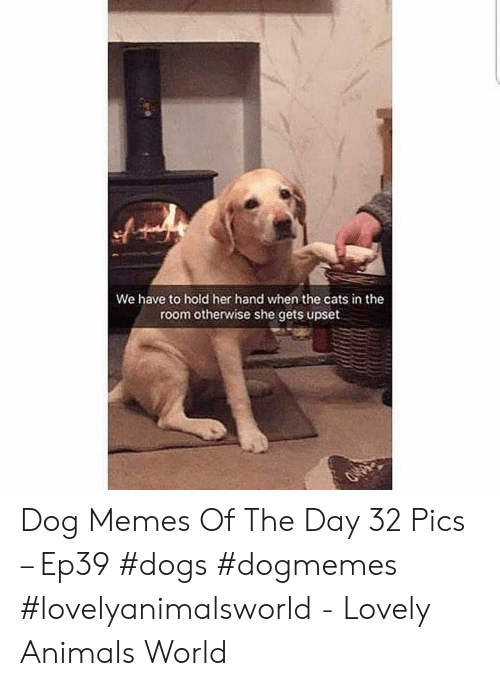Animals, Cats, and Dogs: We have to hold her hand when the cats in the  room otherwise she gets upset Dog Memes Of The Day 32 Pics – Ep39 #dogs #dogmemes #lovelyanimalsworld - Lovely Animals World