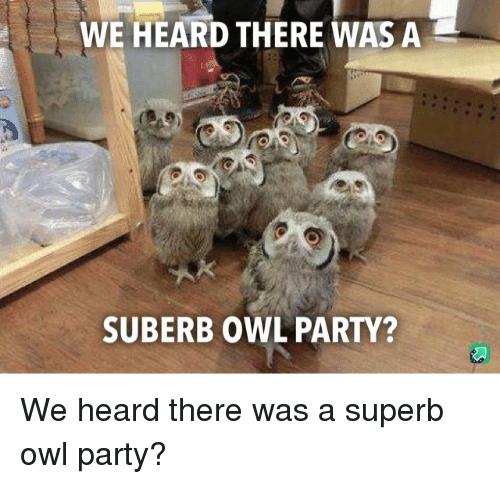 Superb: WE HEARD THERE WAS A  SUBERB OWL PARTY? We heard there was a superb owl party?
