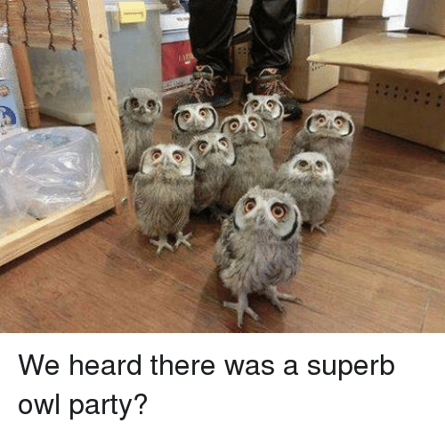 Superb: We heard there was a superb owl party?