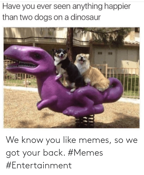 Know You: We know you like memes, so we got your back. #Memes #Entertainment