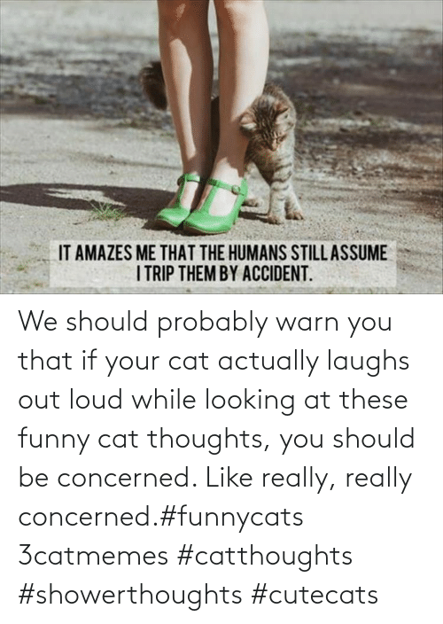 You Should: We should probably warn you that if your cat actually laughs out loud while looking at these funny cat thoughts, you should be concerned. Like really, really concerned.#funnycats 3catmemes #catthoughts #showerthoughts #cutecats