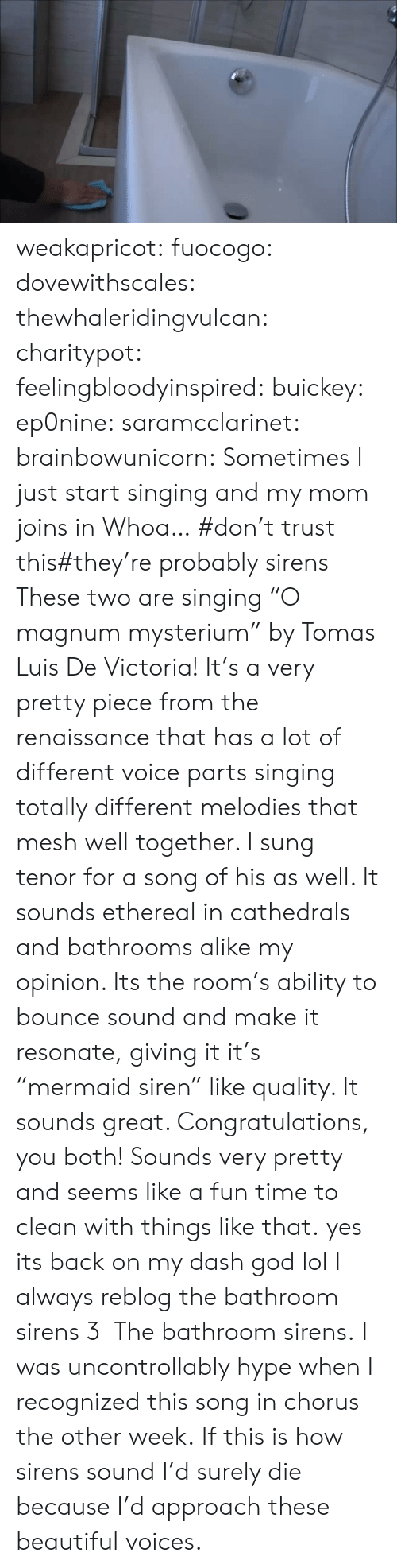 """Chorus: weakapricot:  fuocogo:  dovewithscales:  thewhaleridingvulcan:  charitypot:  feelingbloodyinspired:  buickey:  ep0nine:  saramcclarinet:  brainbowunicorn:  Sometimes I just start singing and my mom joins in  Whoa…  #don't trust this#they're probably sirens  These two are singing """"O magnum mysterium"""" by Tomas Luis De Victoria! It's a very pretty piece from the renaissance that has a lot of different voice parts singing totally different melodies that mesh well together. I sung tenor for a song of his as well. It sounds ethereal in cathedrals and bathrooms alike my opinion. Its the room's ability to bounce  sound and make it resonate, giving it it's """"mermaid siren"""" like quality. It sounds great. Congratulations, you both! Sounds very pretty and seems like a fun time to clean with things like that.  yes its back on my dash  god lol  I always reblog the bathroom sirens 3  The bathroom sirens.   I was uncontrollably hype when I recognized this song in chorus the other week.   If this is how sirens sound I'd surely die because I'd approach these beautiful voices."""