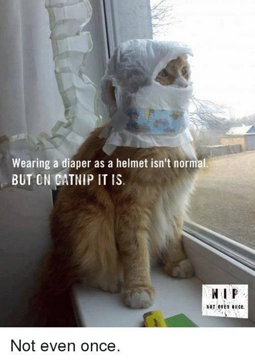Once, Catnip, and Helmet: Wearing a diaper as a helmet isn't normal.  BUT ON CATNIP IT IS  N I P <p>Not even once.</p>