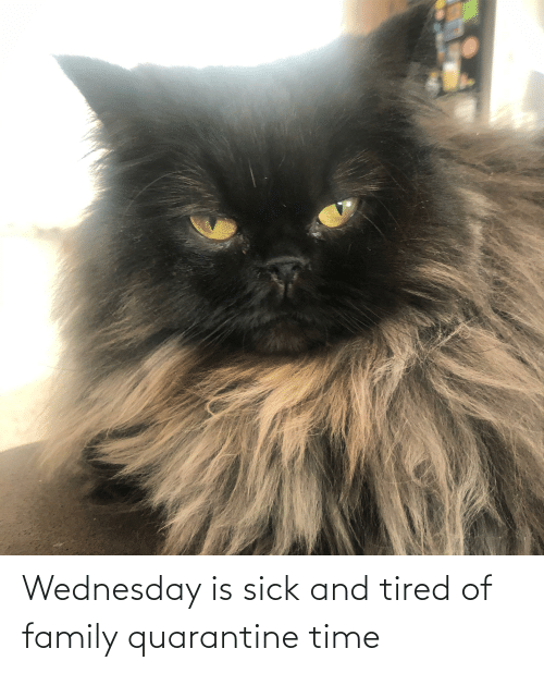 Wednesday: Wednesday is sick and tired of family quarantine time