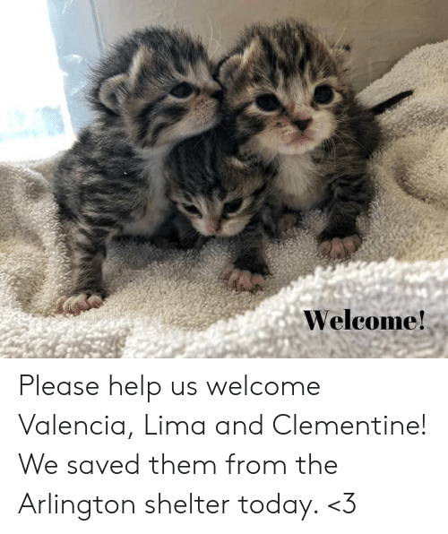 Memes, Help, and Today: Welcome! Please help us welcome Valencia, Lima and Clementine!  We saved them from the Arlington shelter today.  <3