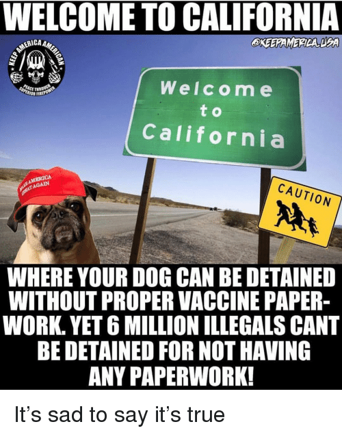 dea: WELCOME TO CALIFORNIA  CA AMER  OKEEAMERDA DEA  Welcom e  CETHR  IOR FIREP  California  CAUTION  AGAIN  WHERE YOUR DOG CAN BE DETAINED  WITHOUT PROPER VACCINE PAPER  WORK. YET 6 MILLION ILLEGALS CANT  BE DETAINED FOR NOT HAVING  ANY PAPERWORK! It's sad to say it's true