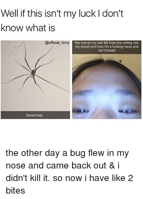 bugging: Well if this isn't my luck l don't  know what is  @official linny  the one on my wall fell from the ceiling into  my mouth and now I'm a fucking mess and  can't breath  Send help the other day a bug flew in my nose and came back out & i didn't kill it. so now i have like 2 bites