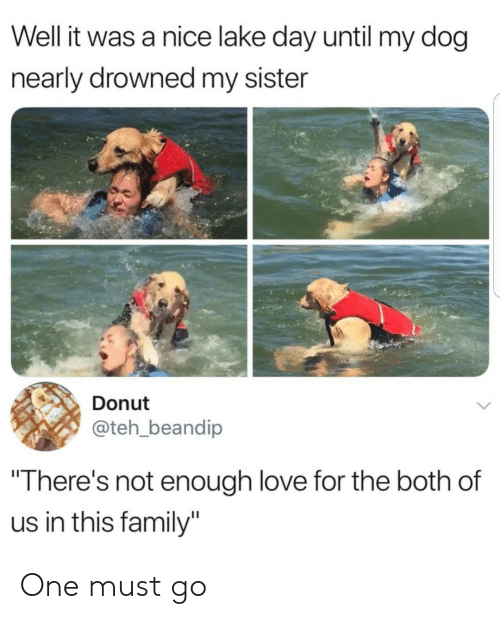 """donut: Well it was a nice lake day until my dog  nearly drowned my sister  Donut  @teh_beandip  """"There's not enough love for the both of  us in this family"""" One must go"""