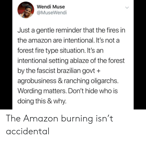 Amazon, Fire, and Muse: Wendi Muse  @MuseWendi  Just a gentle reminder that the fires in  the amazon are intentional. It's not a  forest fire type situation. It's an  intentional setting ablaze of the forest  by the fascist brazilian govt +  agrobusiness & ranching oligarchs.  Wording matters. Don't hide who is  doing this & why. The Amazon burning isn't accidental