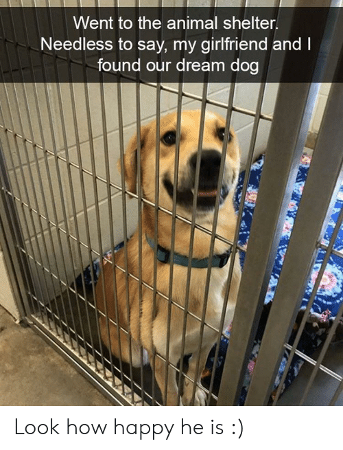Animal Shelter: Went to the animal shelter  Needless to say, my girlfriend and  found our dream dog Look how happy he is :)