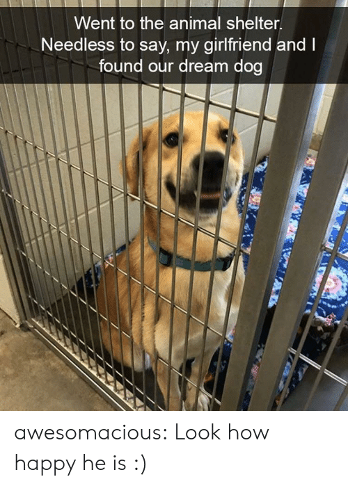Animal Shelter: Went to the animal shelter  Needless to say, my girlfriend and  found our dream dog awesomacious:  Look how happy he is :)