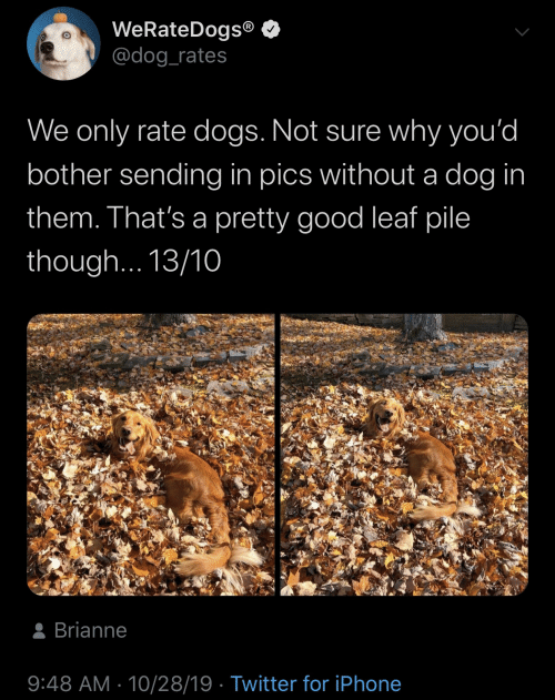 Rate: WeRateDogs®  @dog_rates  We only rate dogs. Not sure why you'd  bother sending in pics without a dog in  them. That's a pretty good leaf pile  though... 13/10  8 Brianne  9:48 AM · 10/28/19 · Twitter for iPhone