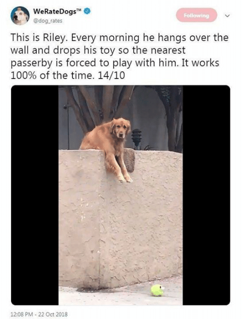 Dank, Time, and 🤖: WeRateDogs  @dog rates  Following  This is Riley. Every morning he hangs over the  wall and drops his toy so the nearest  asserby is forced to play with him. It works  100% of the time. 14/10  12:08 PM-22 Oct 2018