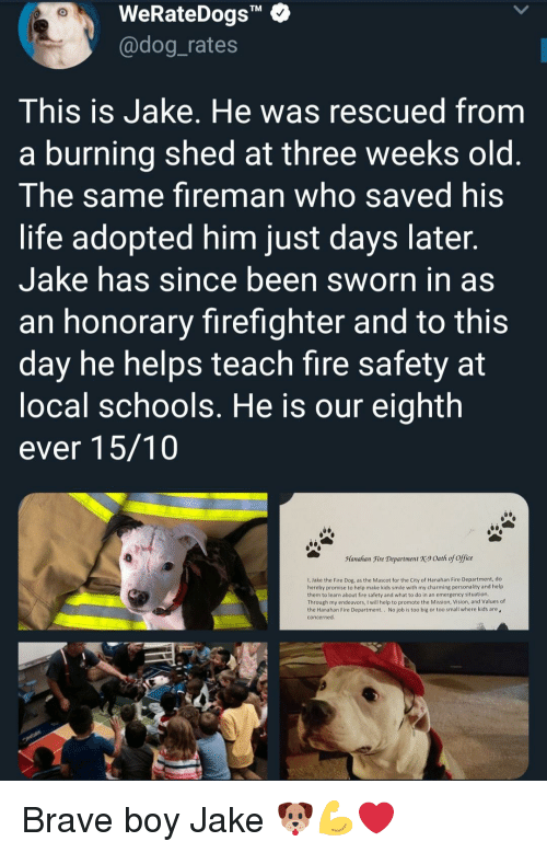 "Sworn: WeRateDogs""  @dog_rates  TM  This is Jake. He was rescued from  a burning shed at three weeks old  The same fireman who saved his  life adopted him just days later  Jake has since been sworn in as  an honorary firefighter and to this  day he helps teach fire safety at  ocal schools. He is our eighth  ever 15/10  Manahan Fire Department X9 Oath of office  1, Jake the Fire Dog, as the Mascot for the City of Hanahan Fire Department, do  hereby promise to help make kids smile with my charming personality and help  them to learn about fire safety and what to do in an emergency situation  Through my endeavors, I will help to promote the Mission, Vision, and Values of  the Hanahan Fire Department.. No job is too big or too small where kids are  concerned Brave boy Jake 🐶💪❤"