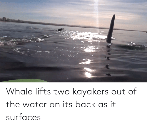 Lifts: Whale lifts two kayakers out of the water on its back as it surfaces