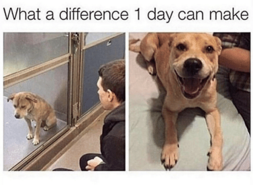 Can, Day, and Make: What a difference 1 day can make