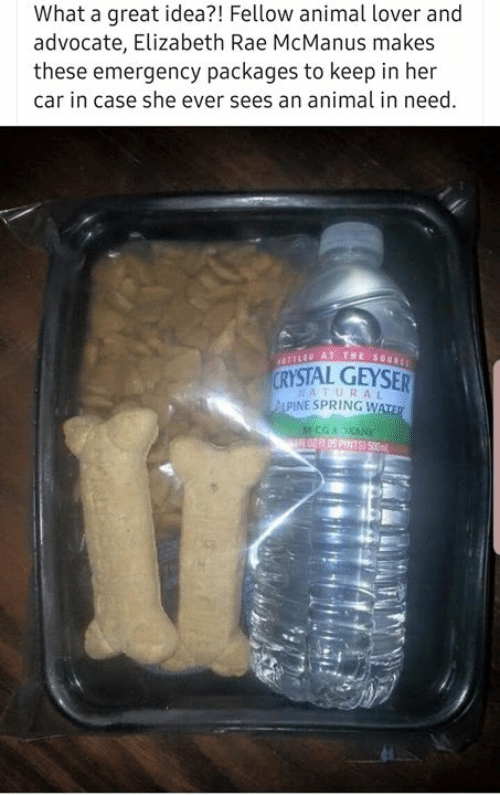 Memes, Animal, and Spring: What a great idea?! Fellow animal lover and  advocate, Elizabeth Rae McManus makes  these emergency packages to keep in her  car in case she ever sees an animal in need  YSTAL GEYSER  NATURAL  PINE SPRING W