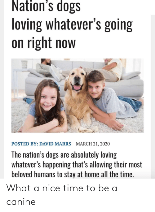 canine: What a nice time to be a canine