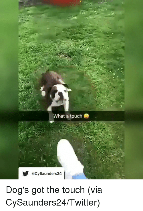 Dogs, Twitter, and Got: What a touch  aCySaunders24 Dog's got the touch   (via CySaunders24/Twitter)