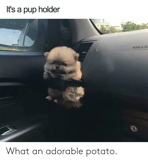 Potato, Adorable, and What: What an adorable potato.