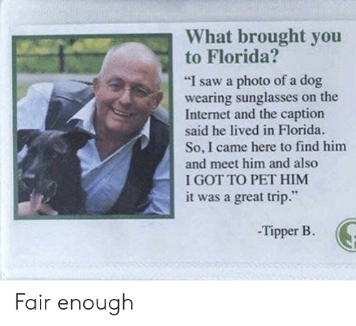 """Internet, Saw, and Florida: What brought you  to Florida?  """"I saw a photo of a dog  wearing sunglasses on the  Internet and the caption  said he lived in Florida.  So, I came here to find him  and meet him and also  I GOT TO PET HIM  it was a great trip.""""  -Tipper B. Fair enough"""