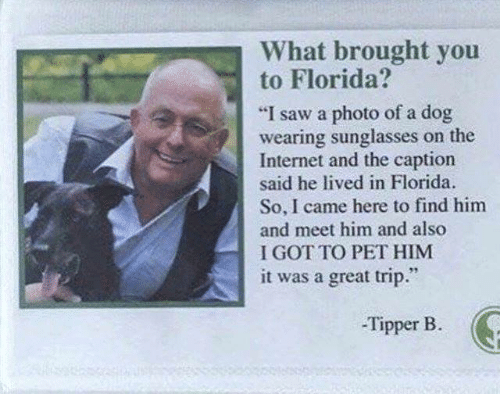 """Dank, Internet, and Saw: What brought you  to Florida?  """"I saw a photo of a dog  wearing sunglasses on the  Internet and the caption  said he lived in Florida  So, I came here to find him  and meet him and also  I GOT TO PET HIM  it was a great trip.""""  -Tipper B"""