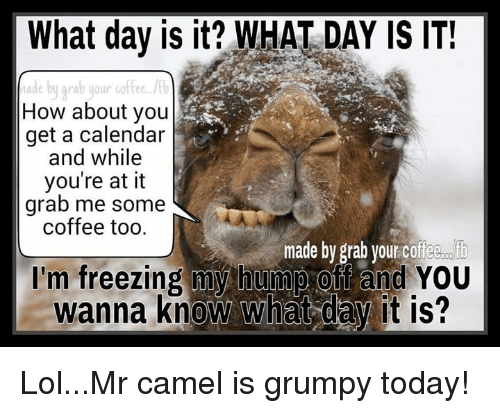 Memes, Calendar, and Wanna Know: What day is it? WHAT DAY IS IT!  Made by grab your coffee.  How about you  get a calendar  and while  you're at it  grab me some  coffee too.  made by grab your coffee  I'm freezing my hump off and YOU  wanna know what day it is? Lol...Mr camel is grumpy today!