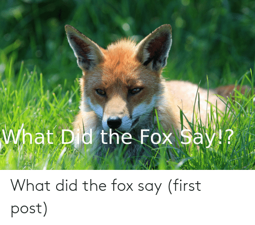 The Fox: What did the fox say (first post)