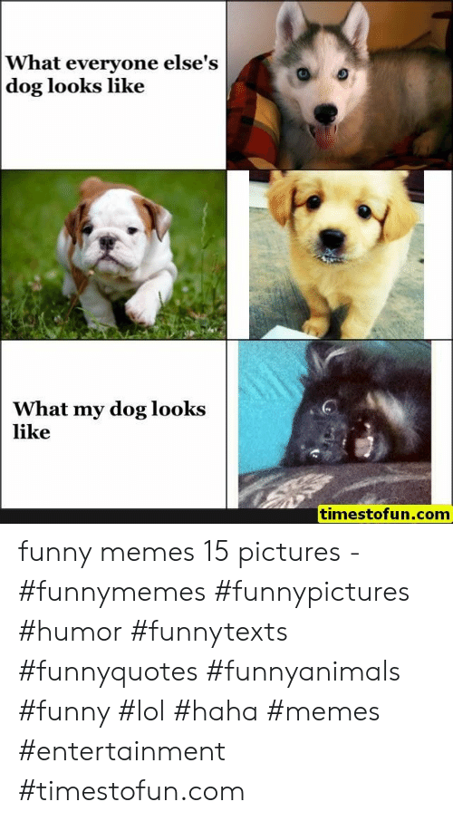 Funny, Lol, and Memes: What everyone else's  dog looks like  What my dog looks  like  timestofun.com funny memes 15 pictures - #funnymemes #funnypictures #humor #funnytexts #funnyquotes #funnyanimals #funny #lol #haha #memes #entertainment #timestofun.com