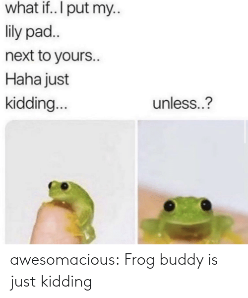 pad: what if.. I put my..  lily pad..  next to yours..  Haha just  unless..?  kidding.. awesomacious:  Frog buddy is just kidding