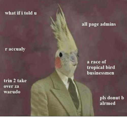 Race, Page, and Pages: what if i told u  r accualy  trin 2 take  over za  warudo  all page admin  a race of  tropical bird  businessmen  pls donut b  alrmed