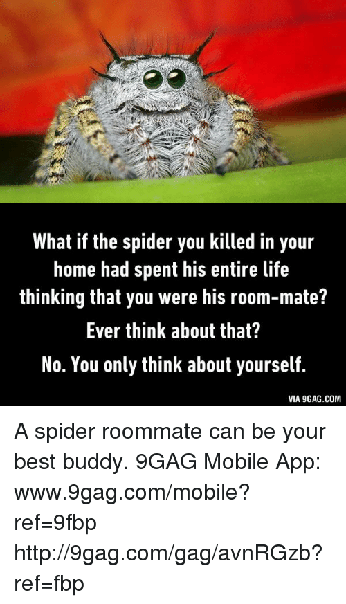Www 9Gag: What if the spider you killed in your  home had spent his entire life  thinking that you were his room-mate?  Ever think about that?  No. You only think about yourself.  VIA 9GAG.COM A spider roommate can be your best buddy.  9GAG Mobile App: www.9gag.com/mobile?ref=9fbp  http://9gag.com/gag/avnRGzb?ref=fbp