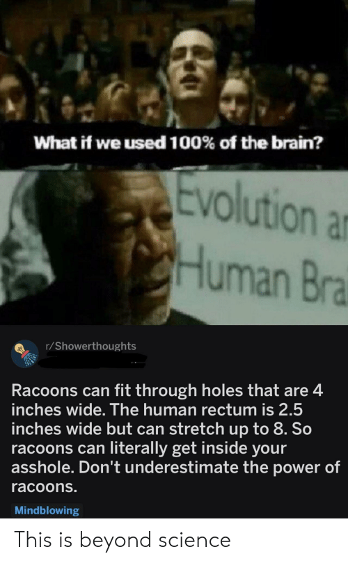 Can Fit: What if we used 100% of the brain?  olution ar  Human Bra  r/Showerthoughts  Racoons can fit through holes that are4  inches wide. The human rectum is 2.5  inches wide but can stretch up to 8. So  racoons can literally get inside your  asshole. Don't underestimate the power of  racoons.  Mindblowing This is beyond science