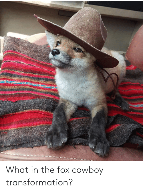 The Fox: What in the fox cowboy transformation?