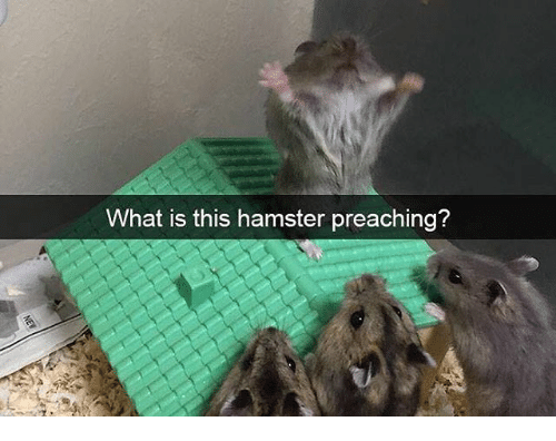 What Is This Hamster Preaching? | Preach Meme on esmemes com