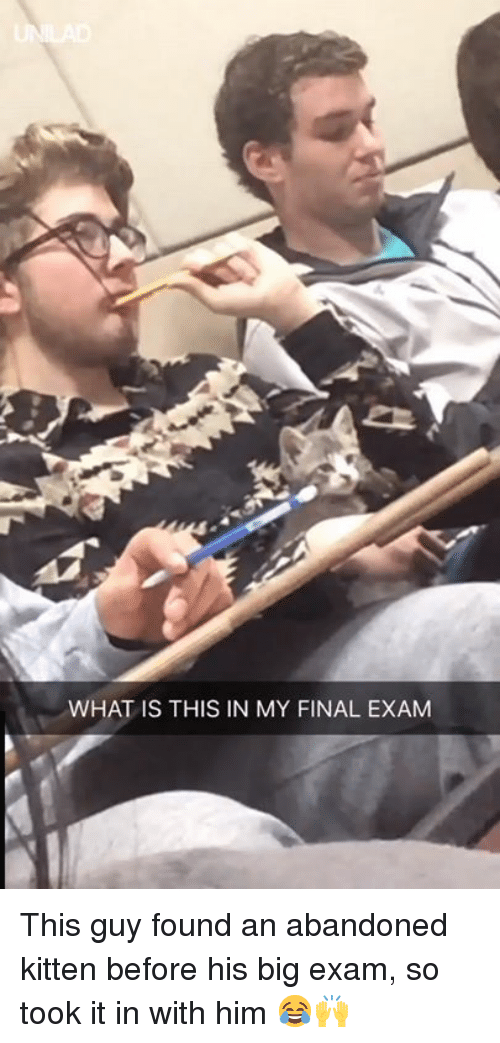 final exam: WHAT IS THIS IN MY FINAL EXAM This guy found an abandoned kitten before his big exam, so took it in with him 😂🙌
