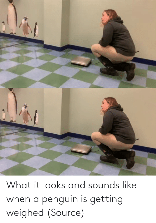 Looks: What it looks and sounds like when a penguin is getting weighed (Source)