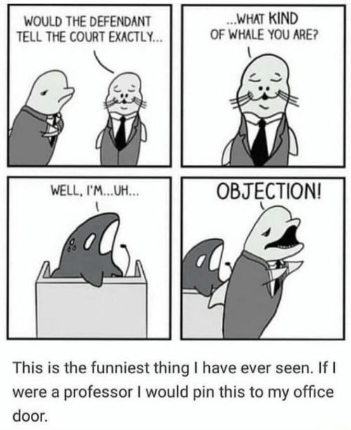 Office, Whale, and Pin: .WHAT KIND  OF WHALE YOU ARE?  WOULD THE DEFENDANT  TELL THE COURT EXACTLY...  OBJECTION!  WELL, I'...UH...  This is the funniest thing I have ever seen. If  were a professor I would pin this to my office  door.