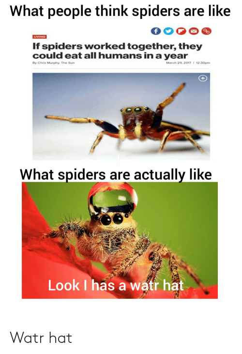 sun: What people think spiders are like  LIVING  If spiders worked together, they  could eat all humans in a year  March 29, 2017 I 12:30pm  By Chris Murphy. The Sun  What spiders are actually like  Look I has a watr hat Watr hat