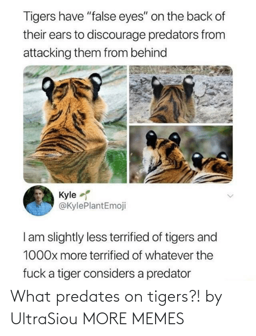 what: What predates on tigers?! by UltraSiou MORE MEMES