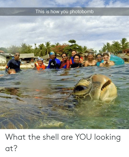 what: What the shell are YOU looking at?