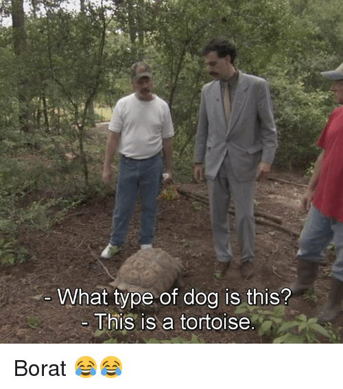 Borat: What type of dog is this?  This is a tortoise Borat 😂😂
